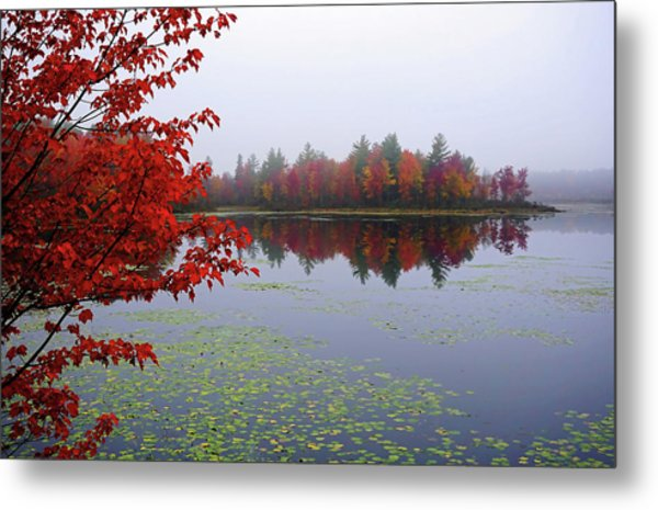 Autumn On The Bellamy Metal Print