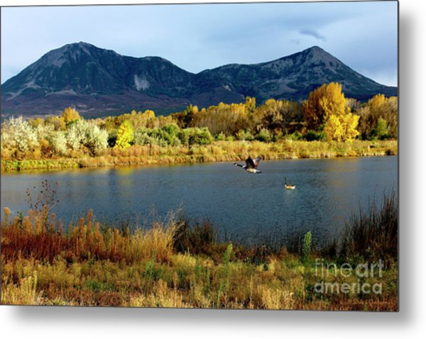 Autumn Rest Stop For Canadian Geese Metal Print