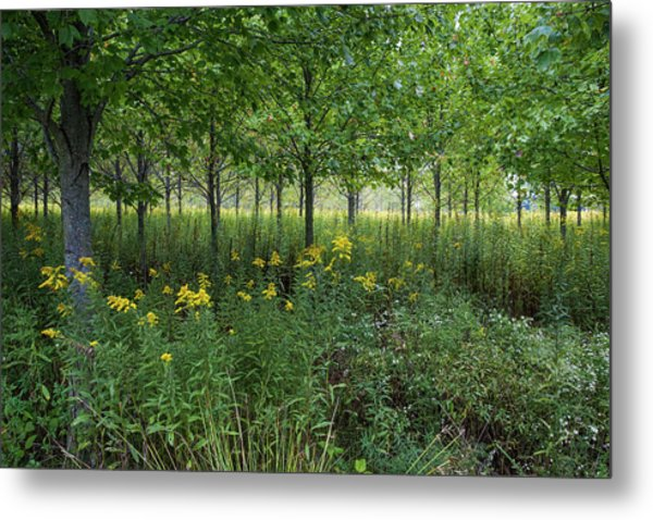Metal Print featuring the photograph Autumn Serenity by Lon Dittrick