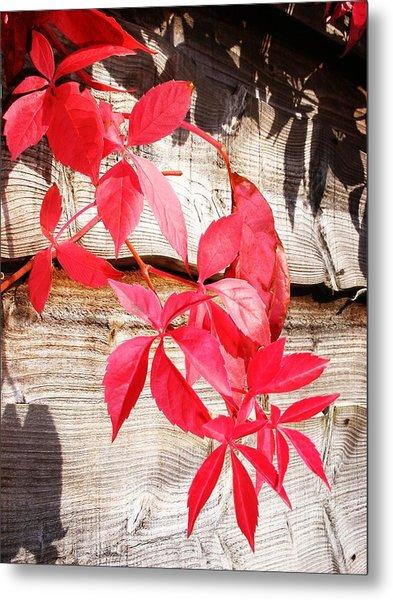 Autumn Shadows Metal Print by Lucia Del