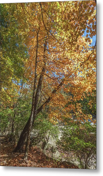 Metal Print featuring the photograph Autumn Show On The River by Lon Dittrick