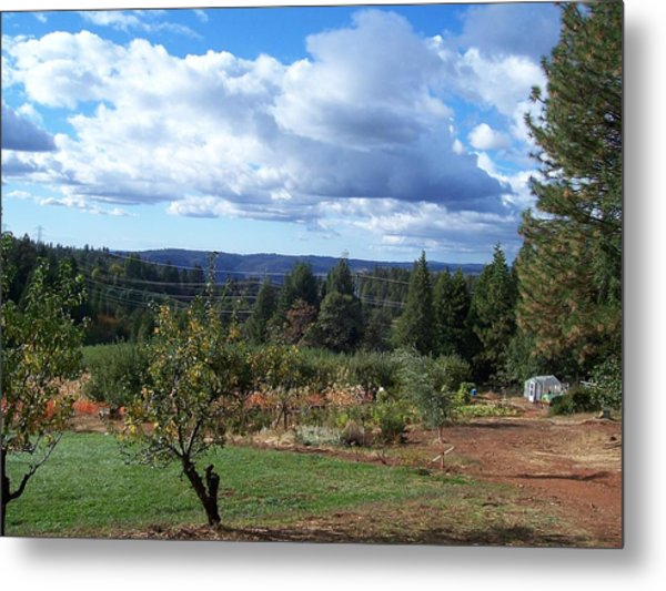 Autumn Sky At Apple Hill Metal Print by Dawn Marie Black