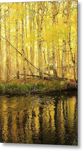 Autumn Soft Light In Stream Metal Print