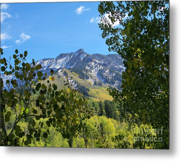 Autumn View Through Aspen Leaves Metal Print