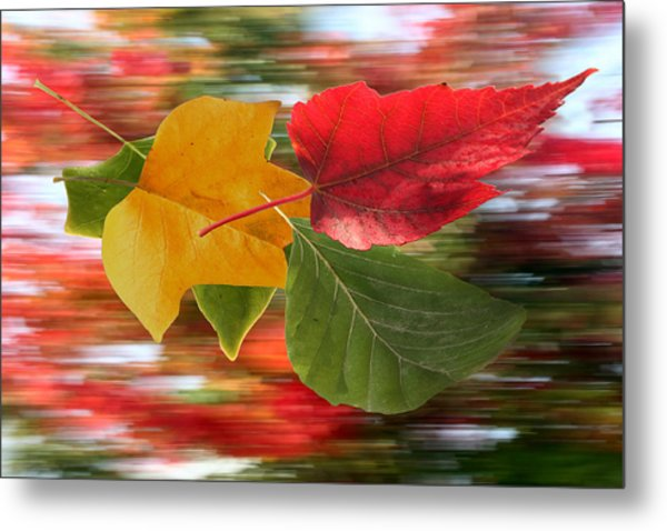 Autumn Wind Metal Print by Barbara  White