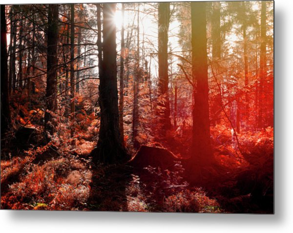 Autumnal Afternoon Metal Print