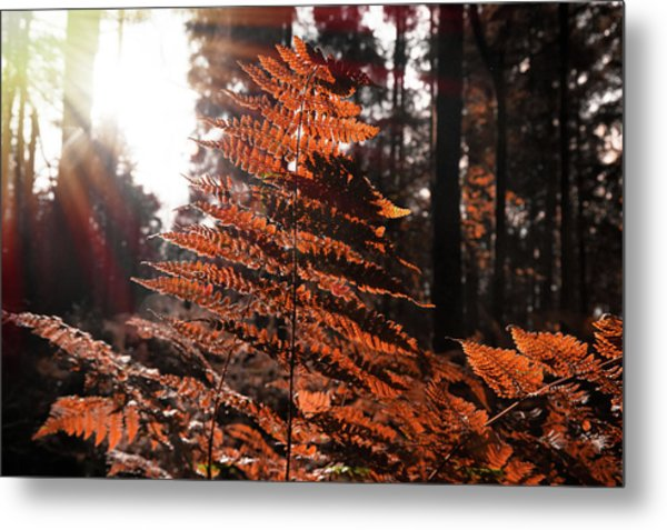 Autumnal Evening Metal Print