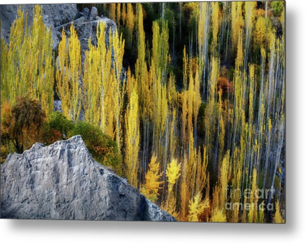 Metal Print featuring the photograph Autumnal Fireworks  by Awais Yaqub