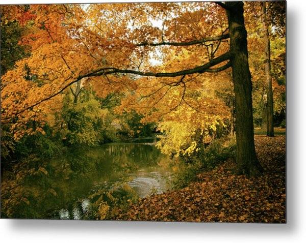 Metal Print featuring the photograph Autumn's Golden Tones by Jessica Jenney