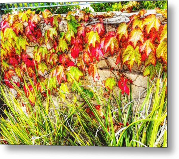 Autumn's Kiss Metal Print