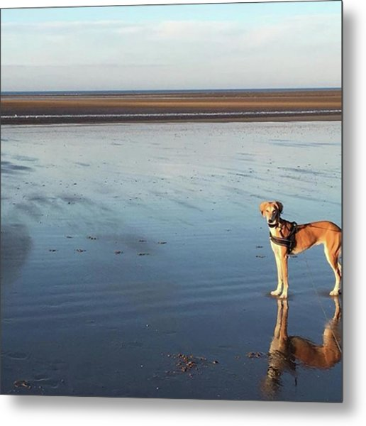 Ava's Last Walk On Brancaster Beach Metal Print