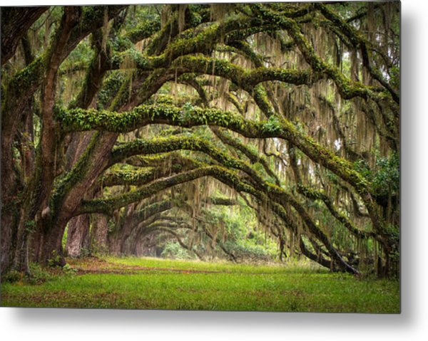 Avenue Of Oaks - Charleston Sc Plantation Live Oak Trees Forest Landscape Metal Print