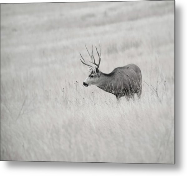Metal Print featuring the photograph Awatoyi by Philip Rodgers