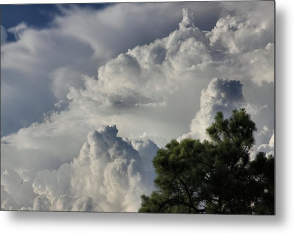 Awesome Cloulds And A Pine Tree Metal Print by Maris Salmins