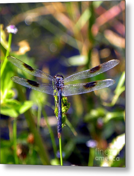 Azure Dragonfly Metal Print