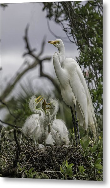 Babies In The Nest Metal Print