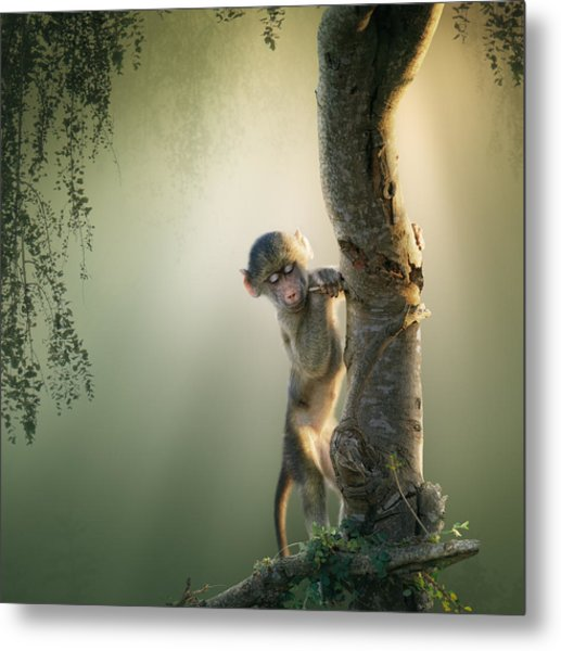 Baby Baboon In Tree Metal Print