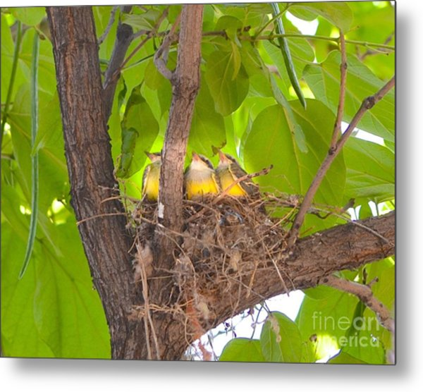Baby Birds Waiting For Mom Metal Print