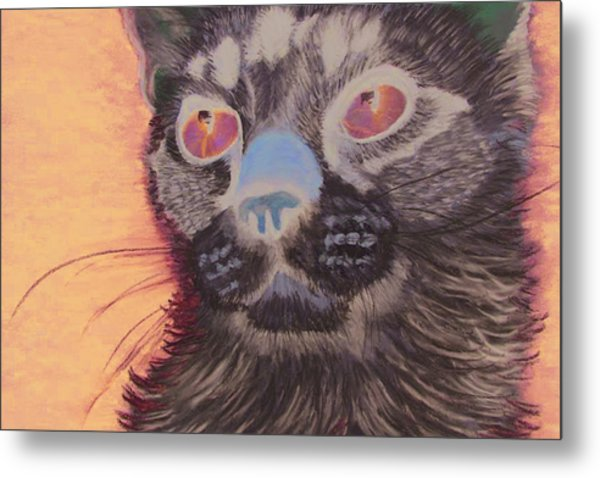 Baby Blue Eyes Metal Print by Jessica Kale