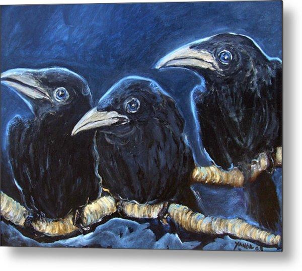 Baby Crows Metal Print