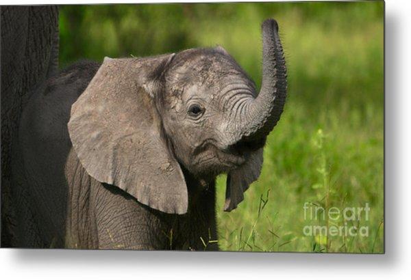 Baby Elephant Smelling Metal Print