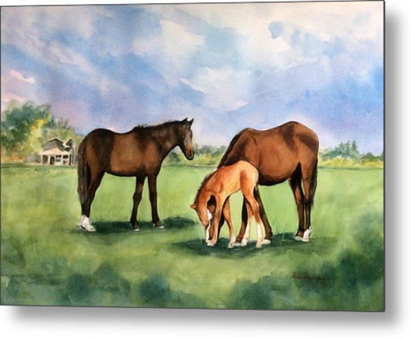 Baby Horse Metal Print