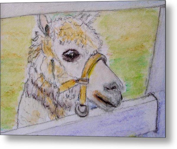 Baby Llama Metal Print by Lessandra Grimley