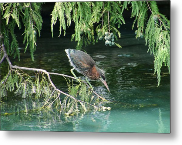Baby Out On A Limb Metal Print