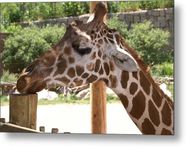 Baby Wants A Cracker Metal Print by Susan Perry