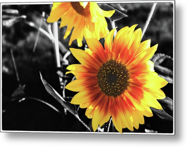 Back-lit Brilliance Metal Print