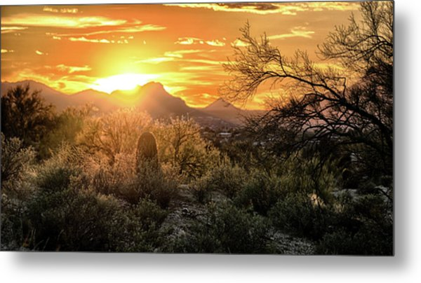 Back Lit Metal Print