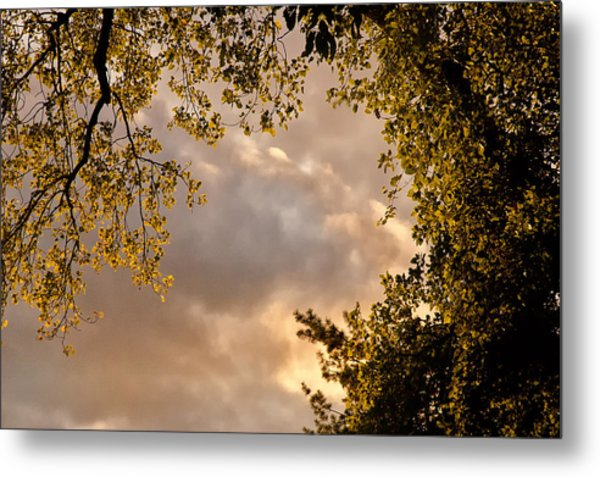 Back Yard Clouds Metal Print by Ross Powell