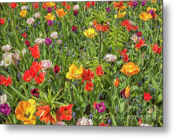 Background Of Colorful Flowers Metal Print