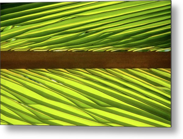 Palm West Metal Print