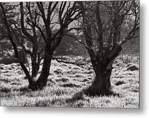 Backlit Trees- St Lucia Metal Print by Chester Williams