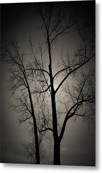 Backlit Trees Metal Print