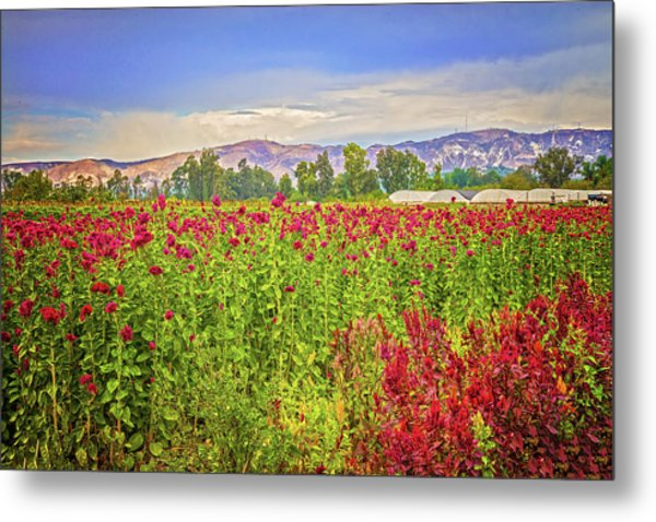 Backroad Beauty In Southern California Metal Print