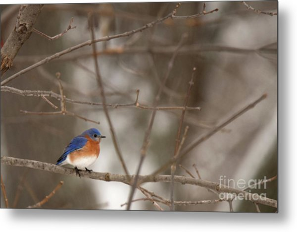 Backyard Blue Metal Print
