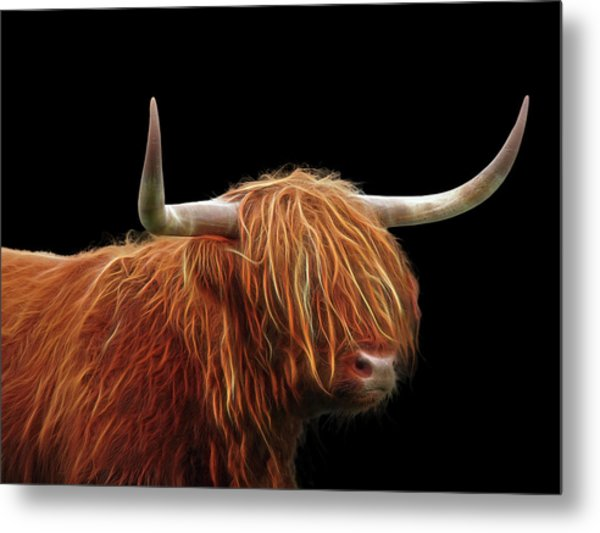Bad Hair Day - Highland Cow - On Black Metal Print
