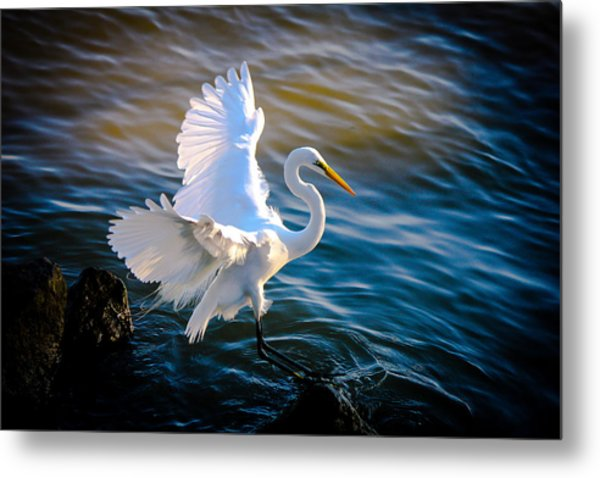 Balancing Act  Great White Egret  Metal Print