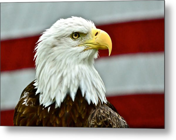 Bald Eagle And Old Glory Metal Print
