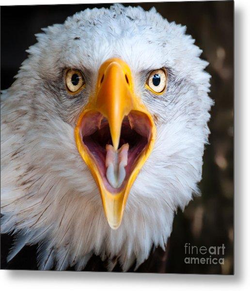 Bald Eagle Call Metal Print