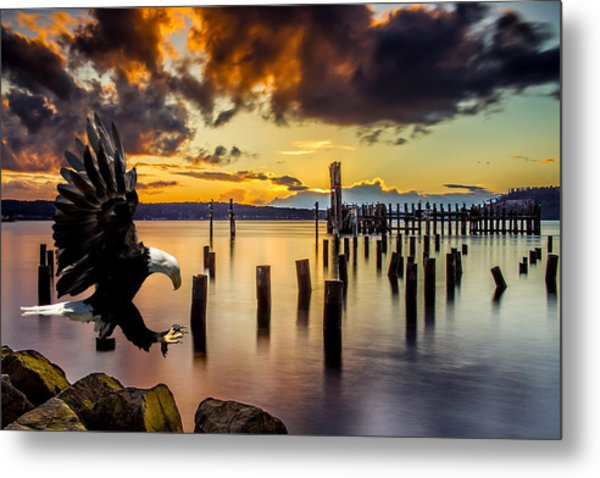 Bald Eagle Landing At Beach As Sun Sets Metal Print