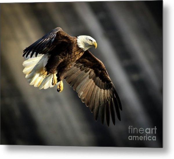 Bald Eagle Prepares To Dive Metal Print