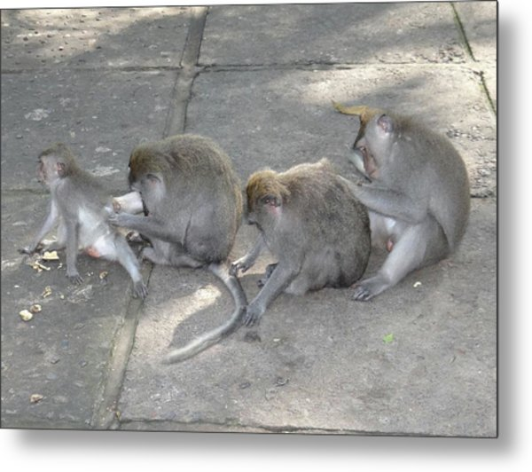 Balinese Monkey Flea Time Metal Print by Exploramum Exploramum