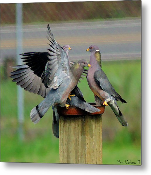 Band-tailed Pigeons #1 Metal Print