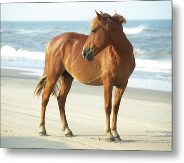Banker Horse - 5 Metal Print