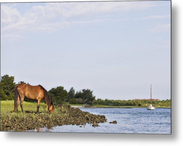 Banker Horse Along Taylors Creek Metal Print