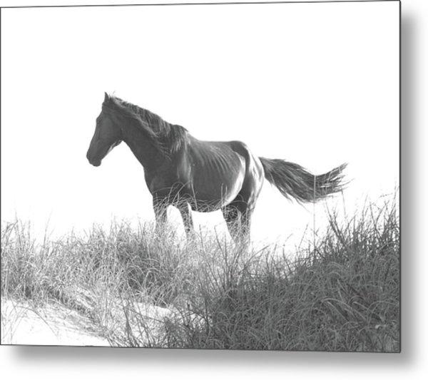 Banker Horse On Dune  1 Metal Print