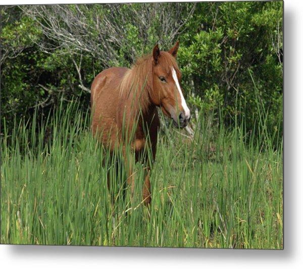 Banker Horses - 10 Metal Print